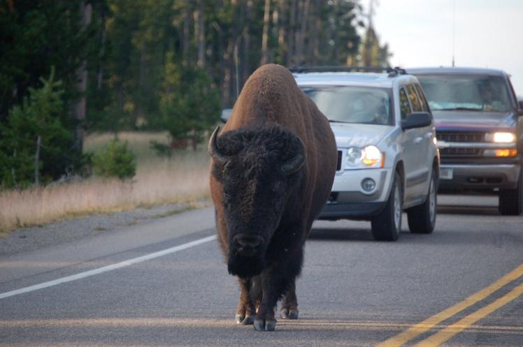 Make Way for Buffalo